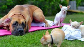 Mera mentalitet - förstå, tolka och påverka hundars beteende kursstart 2020-03-31