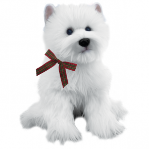 West higland white terrier
